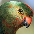 Parrot by Geoffrey Coombe