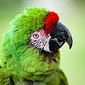 Parrot by Sebastian Musial