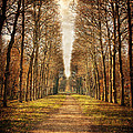 Path In The Woods / Versailles by Barry O Carroll