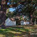 Plantation Cabins by Dale Powell