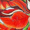 Poinsettias by JAXINE Cummins