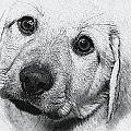 Puppy by Joyce Baldassarre