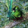 Quetzal by Heiko Koehrer-Wagner