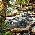River Rapids by Elena Elisseeva