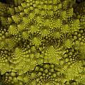 Romanesco - Italian Broccoli by Frank Gaertner