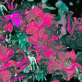 Rose 72 by Pamela Cooper