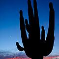 Saguaro Silhouette by John Shaw