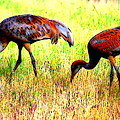 Sandhill Cranes by Kathy Sampson