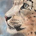 Snow Leopard by David Stribbling