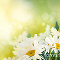 Spring Background by Mythja  Photography
