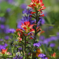 Spring Flowers  by Saija  Lehtonen