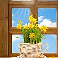 Spring Window by Amanda Elwell