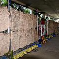 Steve Irwin Memorial by Carol Ailles