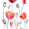 Stylized Poppy Flowers Illustration  by Regina Jershova