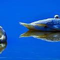 Swan Sleep by Brian Stevens