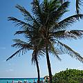 The Beach In Hollywood Florida by Carol Ailles