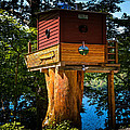 Tree House by Sherman Perry