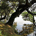 Tree  Reflection by Christiane Schulze Art And Photography