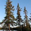 3 Trees by Matthew Barton