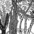 3 Trees Tree Cubed Tree Four Tree Cubed Black White by Lois Picasso