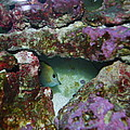Tropical Fish In Cave by Robert Floyd