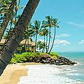 Tropical Paradise by Sharon Mau