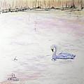 Trumpeter Swan by Sandy Brooks