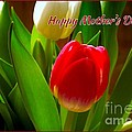 3 Tulips For Mother's Day by Joan-Violet Stretch