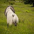 Wild Horses by Joye Ardyn Durham