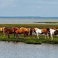 Wild Horses Of Assateague Island by Mountain Dreams