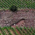 Wine Of Rhine by Jouko Lehto