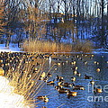 Winter By The Lake by Dora Sofia Caputo Photographic Design and Fine Art
