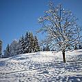 Winter Landscape by Chevy Fleet