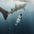 Woman Swimming With Whale Shark by Tyler Stableford