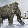 Woolly Mammoth by Science Picture Co