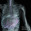 X-ray Anatomy by Science Picture Co