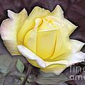 Yellow Rose by Odon Czintos