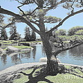 Zen Garden by Eclectic Captures