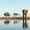 Africa, Botswana, Chobe National Park by Paul Souders