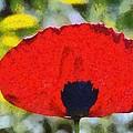 Poppy Flower by George Atsametakis