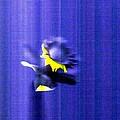 3.13 Daffodil by T Byron K