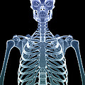 Bones Of The Upper Body by Science Picture Co