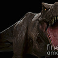 Dinosaur Tyrannosaurus by Science Picture Co