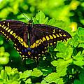 Butterfly by Gerald Kloss