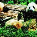3722-panda -  Pastel Pencils by David Lange