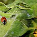 Ladybug by Heike Hultsch
