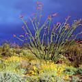 Usa, California, Anza-borrego Desert by Jaynes Gallery