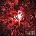 Red Blood Cells by Science Picture Co