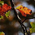 Two Leaves by Gene Tatroe
