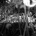 3d Seeds by Tarey Potter